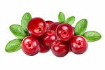 Cranberry / Κράνμπερι